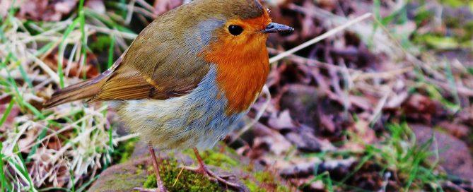 bird-1806649_1920